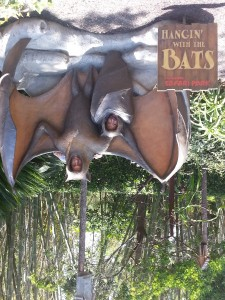 Bats - upside down