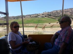 M+T+Giraffes